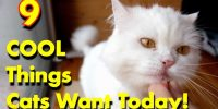 Cat Favorites 9 Cool Gifts Cats Want Today