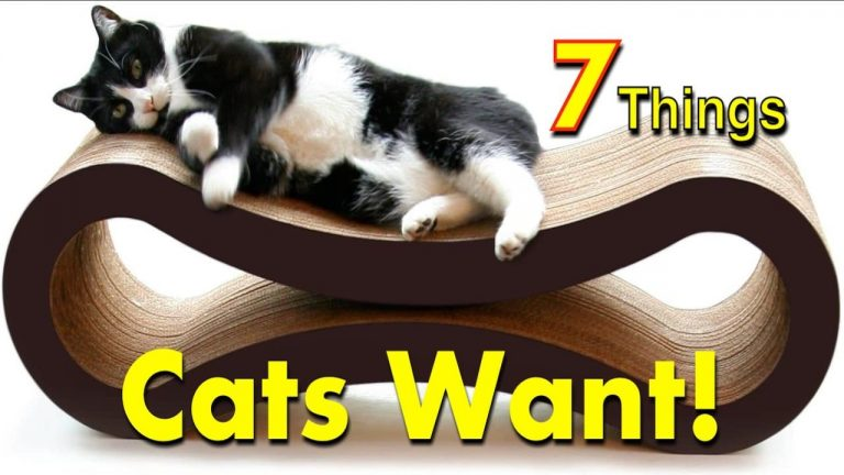 Cat Favorites 7 Gifts on Amazon – Pet Lovers!