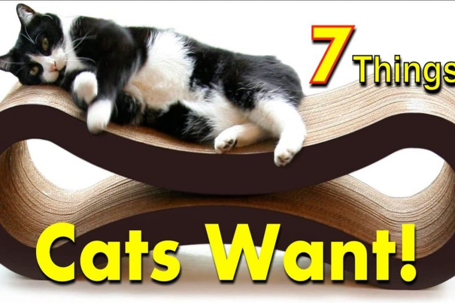 Cat Favorites 7 Gifts