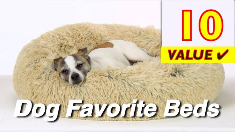 10 Best DOG Beds (Small to Big Dogs)