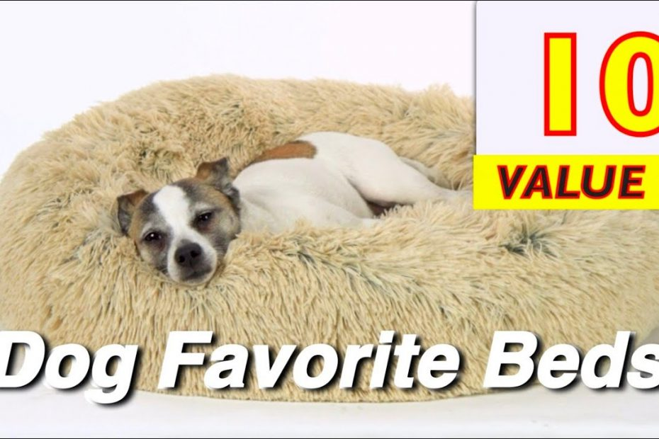 10 Best DOG Beds from Small to Big Dog Pets