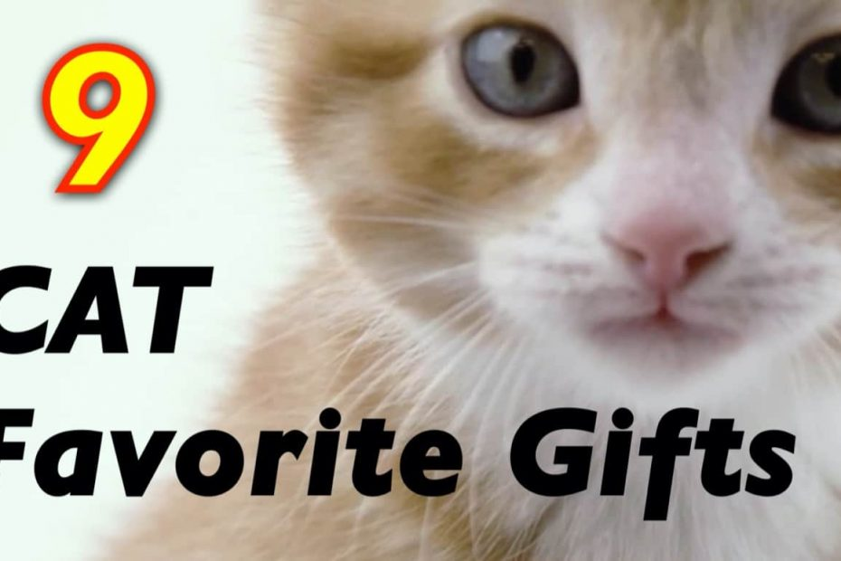 9 Cool Cat Products on Amazon
