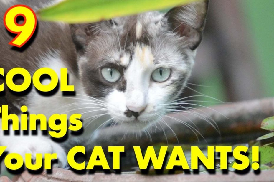 9 Cool Things Your Cat Wants Today