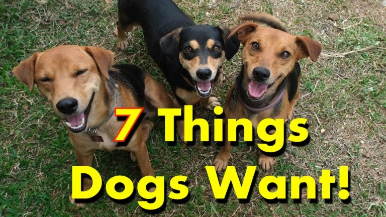 7 Dog Favorite Things You to Buy Today