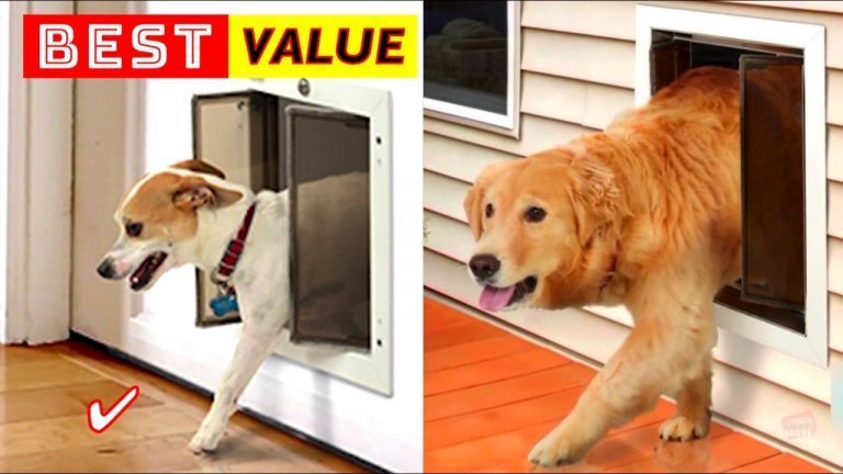Best Pet Door for Dogs and Cats