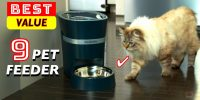 Best PET Feeder for Cats and small Dogs